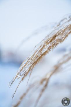 Trawa #2 - Zima 2013, Fotografia Dębica