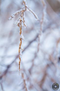Gałązka - Zima 2013, Fotograf Ropczyce