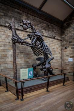 Dinozaur - Natural History Museum