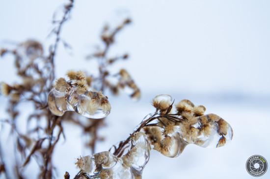 Pąki #2 - Zima 2013, Fotografia Ropczyce